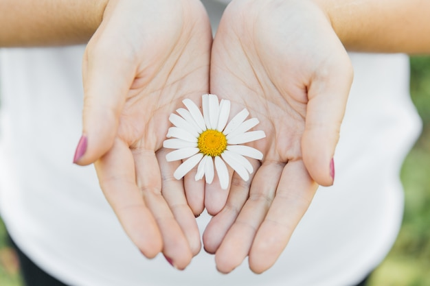 Daisy in the hands of a girl