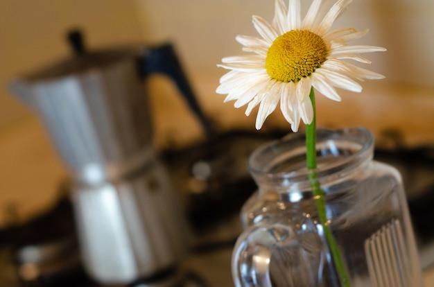 ガラスの花瓶にデイジー、背景にモカポット