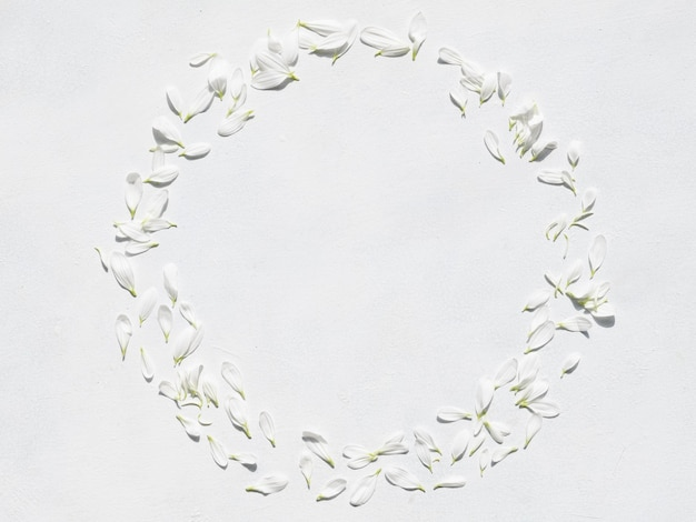 Daisy petals wreath on white background.