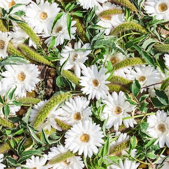 Daisy wheel flowers background. top view