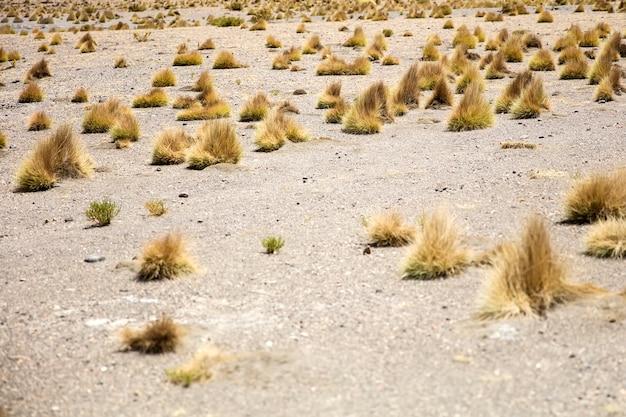Dali desert in bolivia