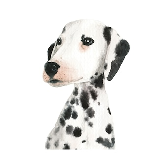 Dalmatian puppy dog watercolor illustration