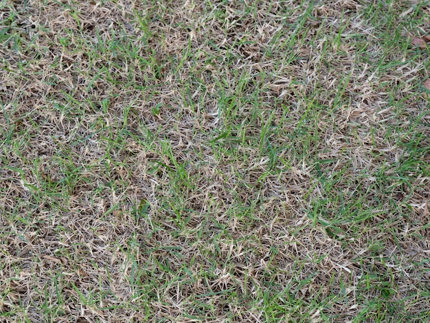 Damage of a green lawn