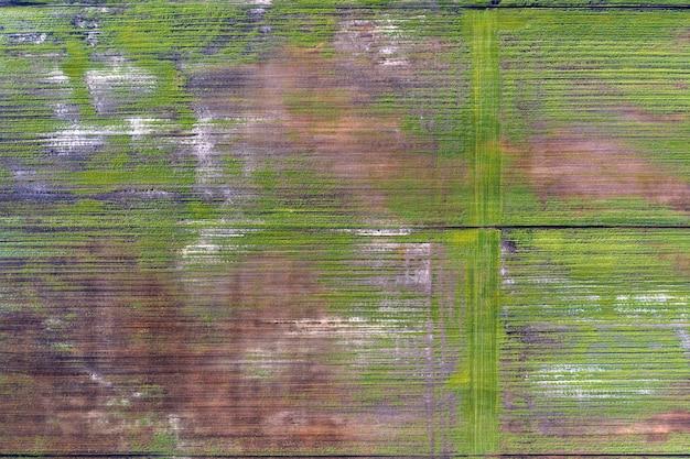 畑の被害を受けた作物。貧しい品種条件、または貧しい土壌や病気のため。病気の農作物。