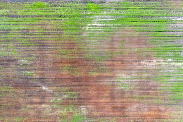 Поврежденные посевы в поле. из-за плохих условий разведения, плохой почвы или болезни. больные сельскохозяйственные культуры.