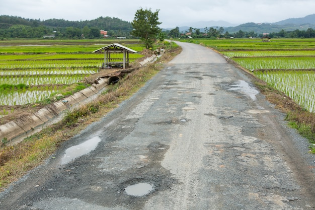 Damaged road on country side with rice field