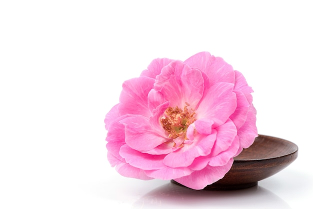 ダマスクローズの花が分離されました。