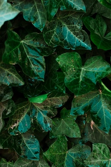 Damp leaves