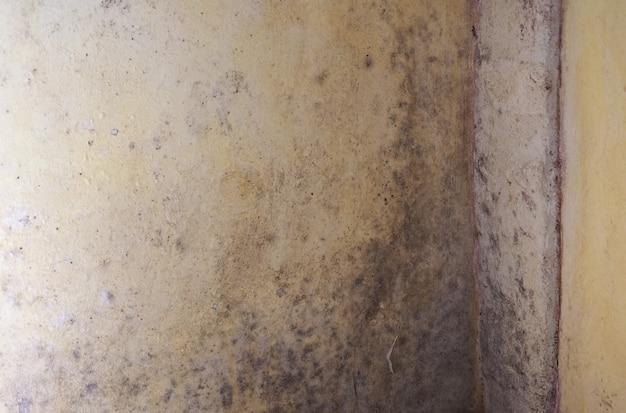 壁の湿気の湿気