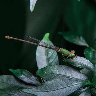 Damsel flies on the leaf
