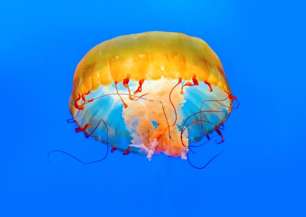 Dancing jellyfish in the depths of the sea