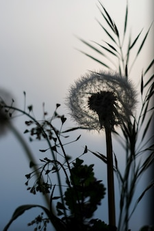 Одуванчик и трава на фоне голубого неба