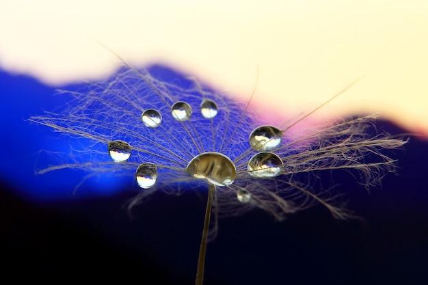Макро фотография цветка одуванчика с каплями воды на фоне рассвета в гористой местности