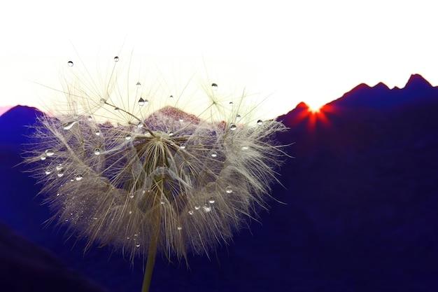 산악 지형의 배경에 물 방울과 민들레 꽃
