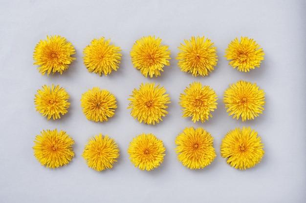 민들레 꽃은 회색 배경에 직사각형 모양으로 줄지어 배열되어 있습니다. 스프링 개념과 플랫 레이의 최소한의 개념