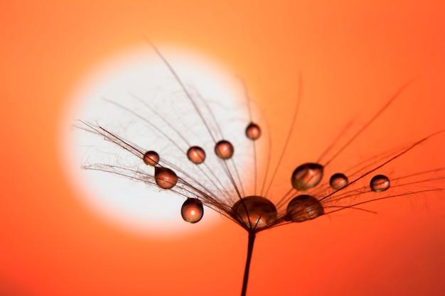 하늘과 석양에 물 방울과 민들레 씨앗