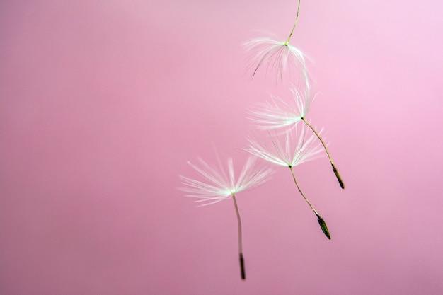 Dandelion seeds background abstract macro photo. copyspace