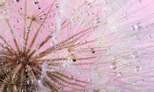 美しい背景の上の露の滴のタンポポの種。