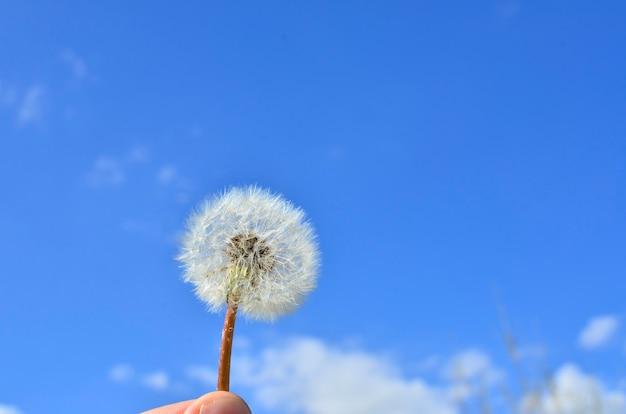 空に吹き飛ばされる日光のタンポポの種
