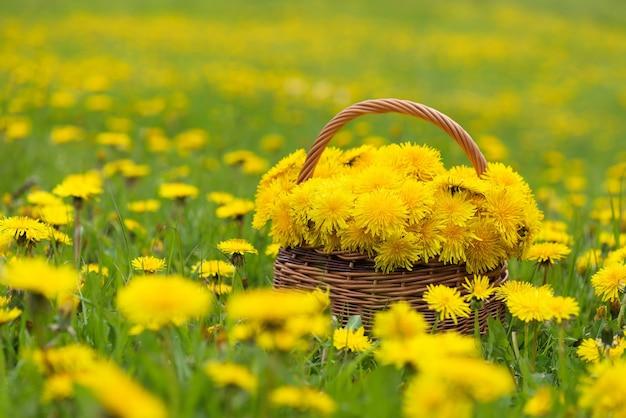 日光の下でバスケットにタンポポの黄色い花の花束。
