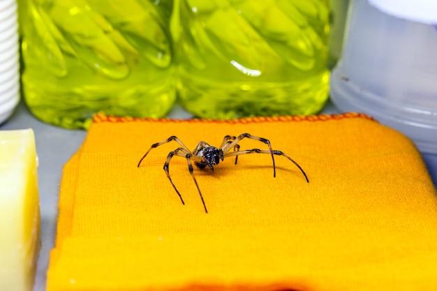 家の中を歩く危険な動物、洗濯物の中のクモ、害虫または害虫駆除の概念