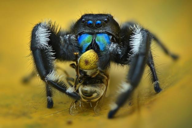 위험한 거미 먹이 세부 사항 매크로 익스트림 매크로 거미