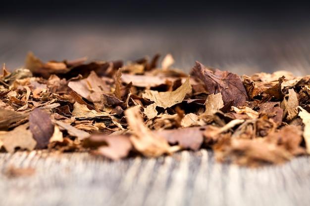 タバコからの危険なタバコ、ニコチン中毒を引き起こすタバコからのタバコ
