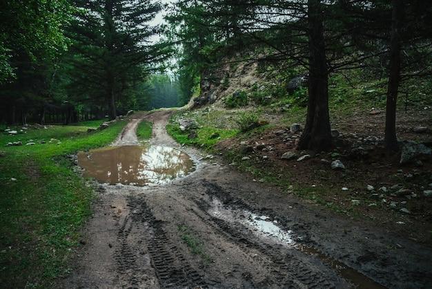 未舗装の道路に水たまりのある暗い大気の森の風景雨天の山の暗い針葉樹林
