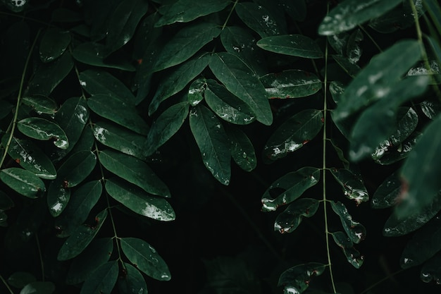 A dark background with dark green leaves and shadows