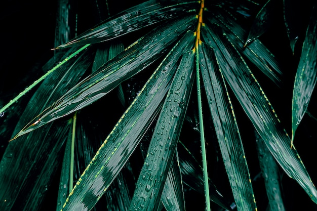 Dark bamboo leaf in tropical jungle nature background