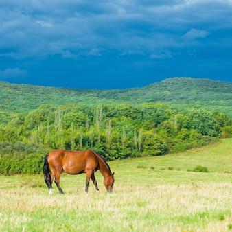 緑の草のある牧草地の暗い湾の馬