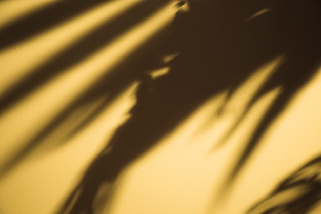 Dark black palm leaves shadow on yellow backdrop