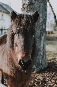 Темно-коричневая лошадь стоит перед белым домом и высоким деревом