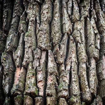 Темно-коричневая кора дуба может быть использована в качестве фона и текстуры.