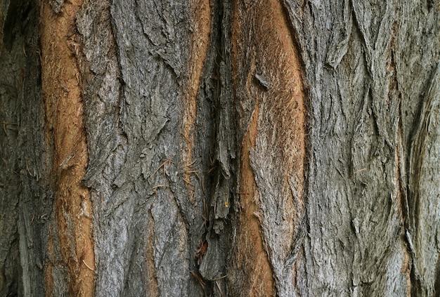 ダークブラウンの荒い木の樹皮のテクスチャ