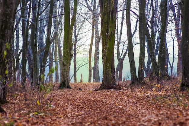 秋の森の地面に暗くて乾燥した紅葉