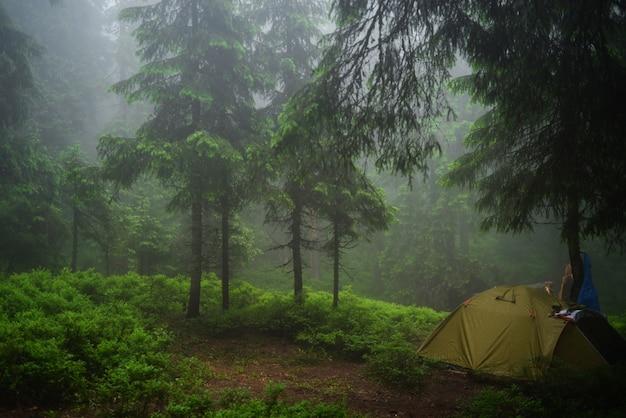 Dark fairy forest