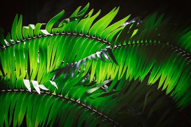 Dark fern leaves background image