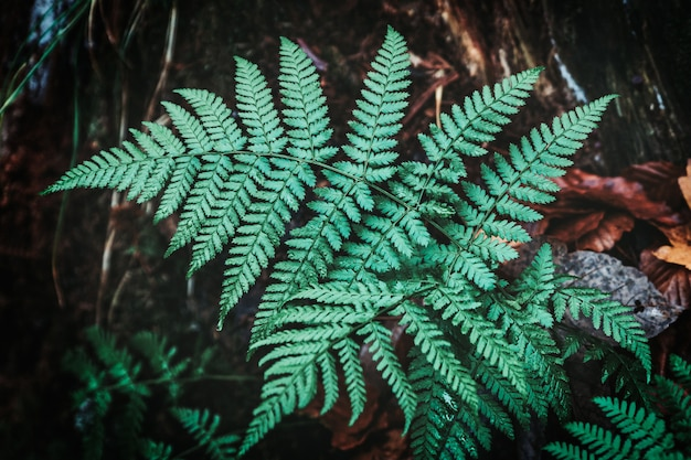 Dark fern near the tree trunk, abstract image for background
