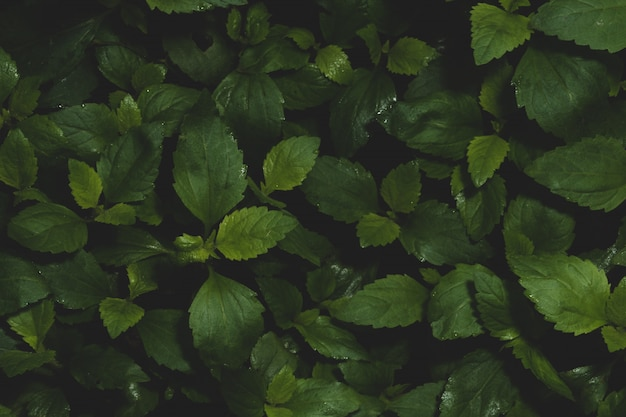 Dark foliage background