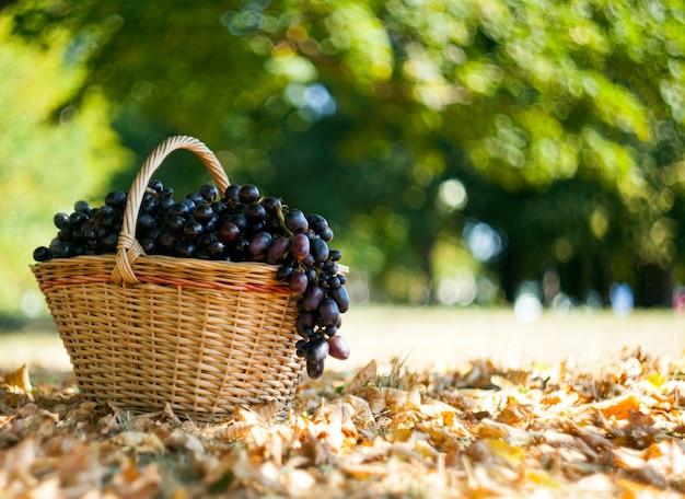 Темный виноград в корзине в осеннем лесу. фон боке. осень и сентябрь концепция сбора урожая.