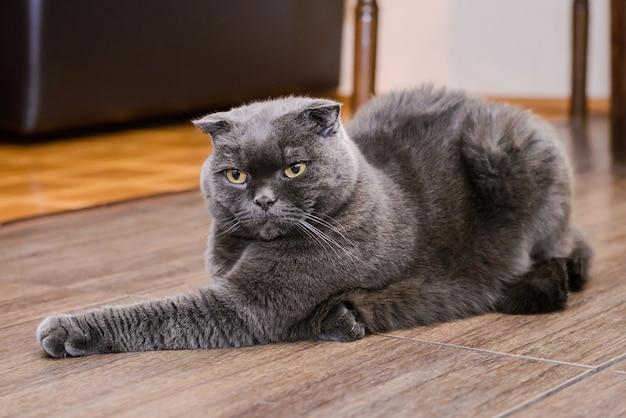 Темно-серый кот, лежащий на полу