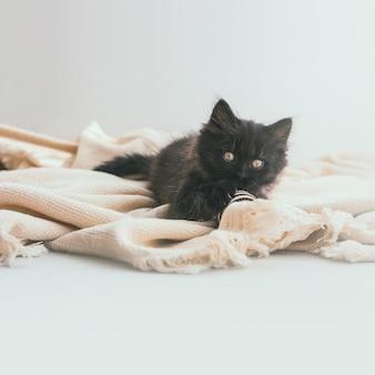 ダークグレーのかわいい子猫は、ストライプのジュートボールとベージュの綿の毛布の上に横たわっています