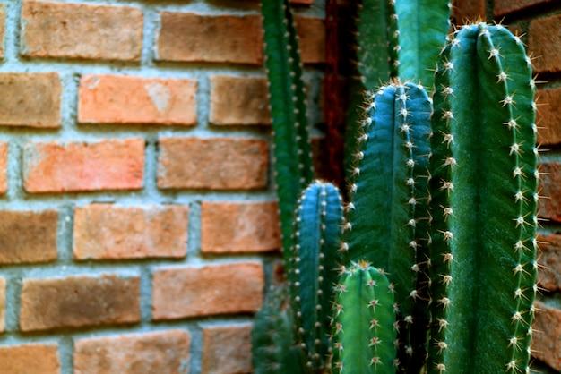 Dark green cactus against terracotta brick wall