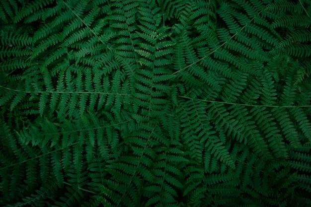 濃い緑のシダの枝のテクスチャ