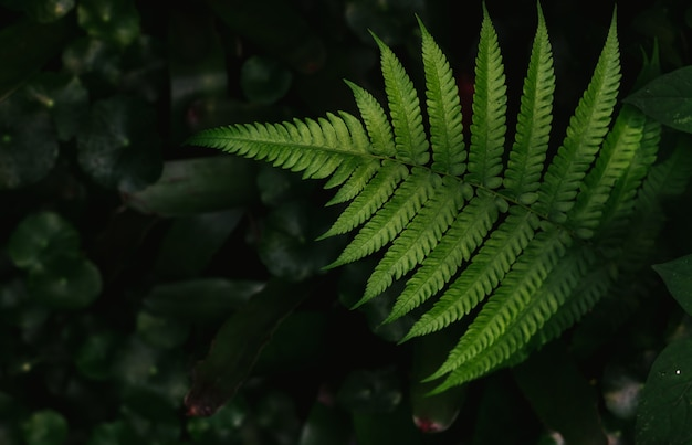 Темно-зеленый лист папоротника
