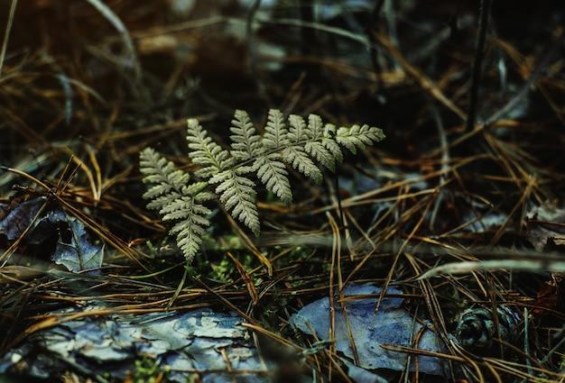 Темно-зеленые листья папоротника в осеннем лесу, осенний лесной фон