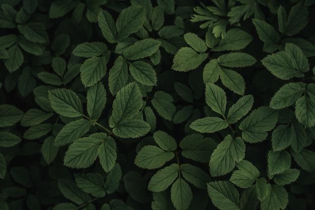 진한 녹색 단풍 여름 배경, 녹색 나뭇잎 패턴 배경