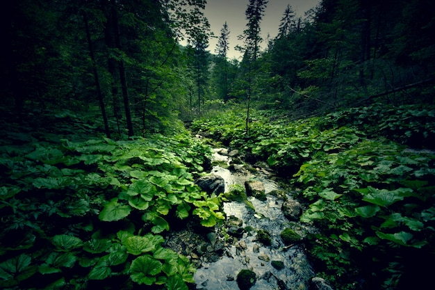 暗緑色の森と川。