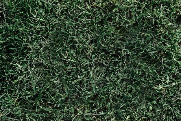 골프 코스 배경에서 짙은 녹색 잔디 질감